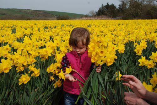 Child in Daffodil Field
