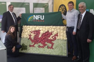 Welsh Flag out of Veg