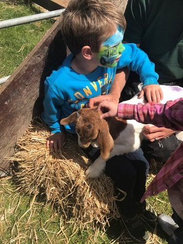 Meeting the goats at Open Farm Sunday 2017