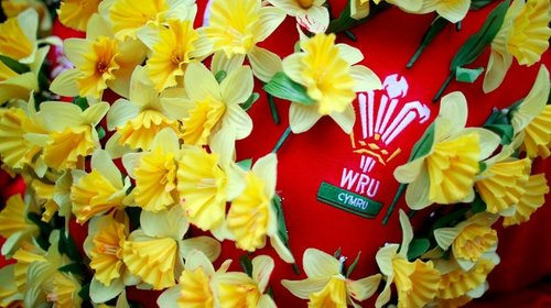Puffin Produce give away 10,000 Daffodils at England vs. Wales