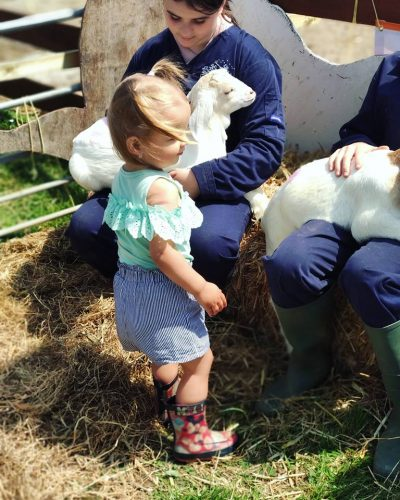 Meeting the Chickens at Open Farm Sunday 2018 in Pembrokeshire