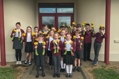 Mothers Day Daffodils to Schools 2019